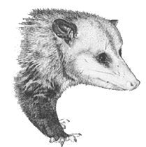 National Opossum Society